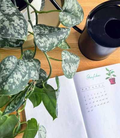 kambarinių augalų laistymas