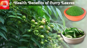Health benefits of Curry leaves, our very own Kadi Patta