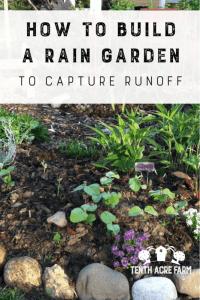 """Erfahren Sie, wie Sie einen Regengarten bauen, in dem Regenwasser von harten Oberflächen wie Dächern oder Gehsteigen abfließt, um das Wasser zu bewässern oder die Wasserverschmutzung zu verringern. #watermanagement #rainbarrels #raingarden """"width ="""" 534 """"height ="""" 800 """"srcset ="""" https://i1.wp.com/www.tenthacrefarm.com/wp-content/uploads/Build-a-Rain-Garden-Pin-534x800.png?fit=300%2C300&ssl=1 534w , https://www.tenthacrefarm.com/wp-content/uploads/Build-a-Rain-Garden-Pin-683x1024.png 683w, https://www.tenthacrefarm.com/wp-content/uploads/Build- a-Rain-Garden-Pin-200x300.png 200w, https://www.tenthacrefarm.com/wp-content/uploads/Build-a-Rain-Garden-Pin.png 735w """"sizes ="""" (max-width: 534px) 100vw, 534px"""