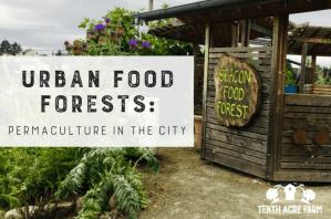 """Urbane Nahrungsmittelwälder: Demonstration der Permakultur in der Stadt - Lebensmittelwälder sind Permakulturgärten, die aus essbaren Stauden bestehen. Finden Sie heraus, wie zwei städtische Lebensmittelwälder die lokale Lebensmittelbewegung durcheinander bringen. """"Width ="""" 800 """"height ="""" 529 """"srcset ="""" https://www.tenthacrefarm.com/wp-content/uploads/Urban-Food-Forests -featured-800x529.png 800w, https://www.tenthacrefarm.com/wp-content/uploads/Urban-Food-Forests-featured-300x199.png 300w, https://www.tenthacrefarm.com/wp-content /uploads/Urban-Food-Forests-featured-768x508.png 768w, https://www.tenthacrefarm.com/wp-content/uploads/Urban-Food-Forests-featured-1024x678.png 1024w, https: // www .tenthacrefarm.com / wp-content / uploads / Urban-Food-Forests-featured-680x450.png 680w, https://www.tenthacrefarm.com/wp-content/uploads/Urban-Food-Forests-featured.png 1360w """"sizes ="""" (maximale Breite: 800px) 100vw, 800px"""