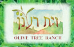 olive-tree-ranch