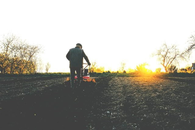 Man plowing with rotatilor