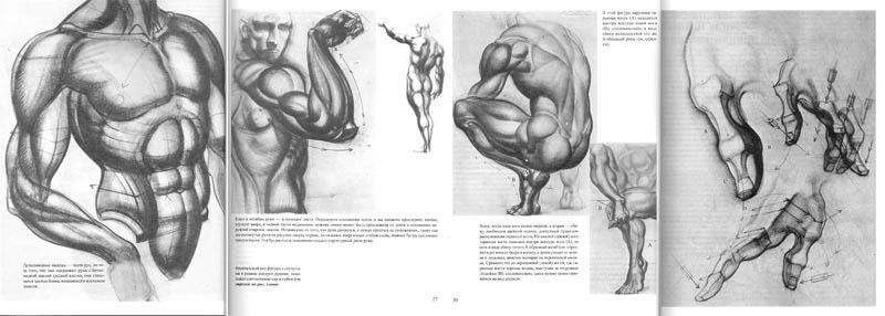 ANATOMÍA PARA ARTISTAS: BURNE HOGARTH