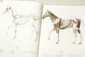 Foto_Innenseite_5157_Anatomische-Zeichenschule-Tier_d_06