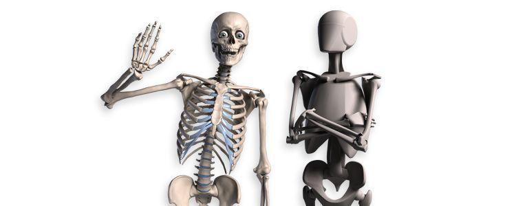 Anatomía humana para artistas -skelly-roboskelly