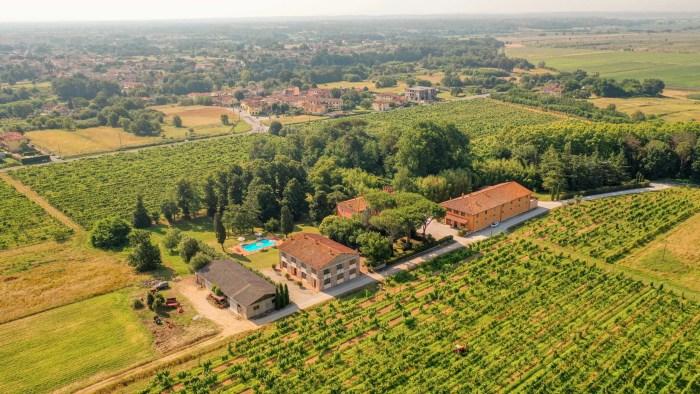 Vista sulle Tenute circondate dalle Vigne