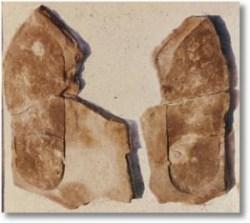 Urmele descoperite in Utah