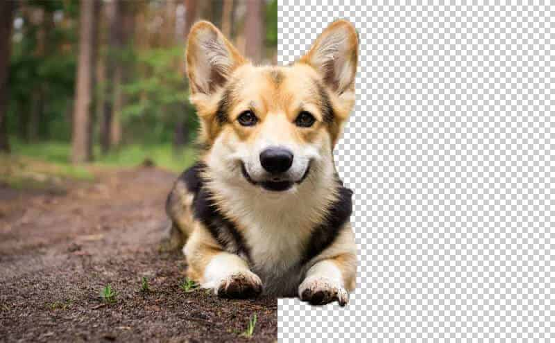 إزالة خلفية الصور أونلاين بسهولة عبر موقع Bgeraser.com