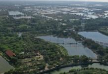 Hutan Mangrove di Wonorejo Surabaya
