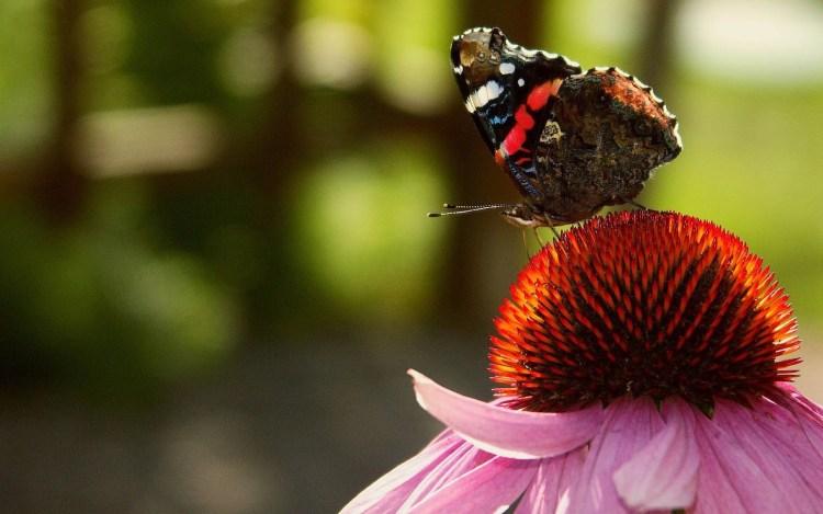 Farfalle Terapia della bellezza Consulenza di Immagine Roma corso Personal Shopper e Consulente di Immagine Roma 08