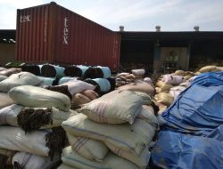 "Rumput Laut ""Sampah"" Asal Batam Tembus Pasar China, Vietnam dan Jepang"