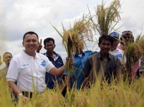 Ridho Ficardo dan warga memanen padi unggul varietas 400 di Desa Wonodadi, Gadingrejo, Kabupaten Pringsewu.