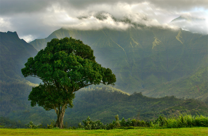 Namahana Mountain Range with tree in foreground