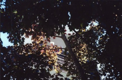 manda and frieda in the trees