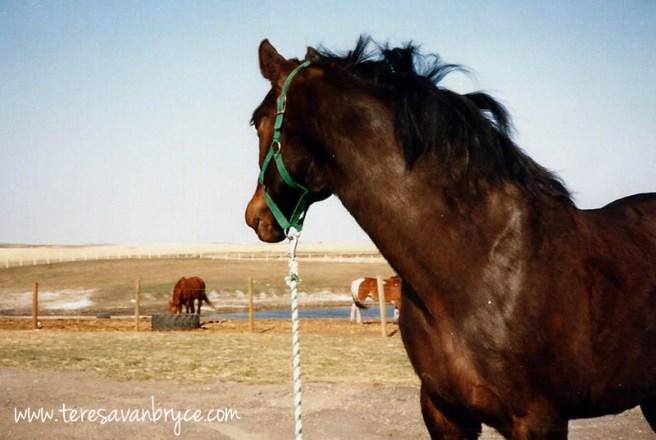 Echo looking back at pasture