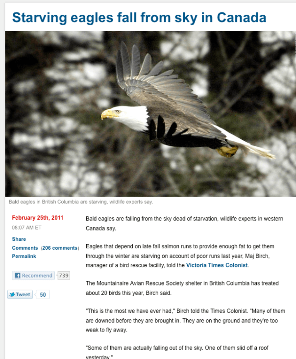 Starving eagles fall from sky in Canada