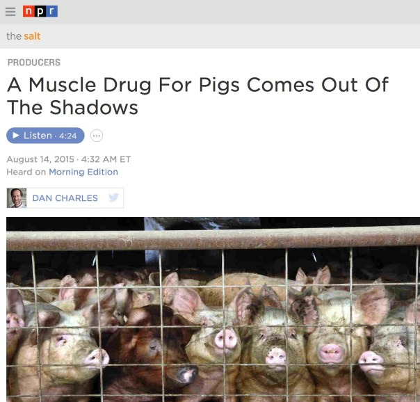 npr-a-muscle-drug-for-pigs-comes-out-of-the-shadow