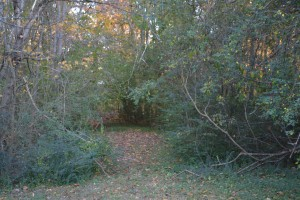 Path through fallen leaves