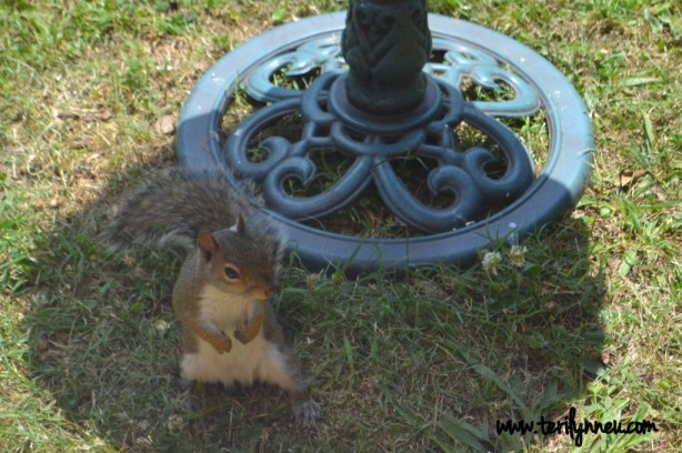 one beautiful thing www.terilynneunderwood.com