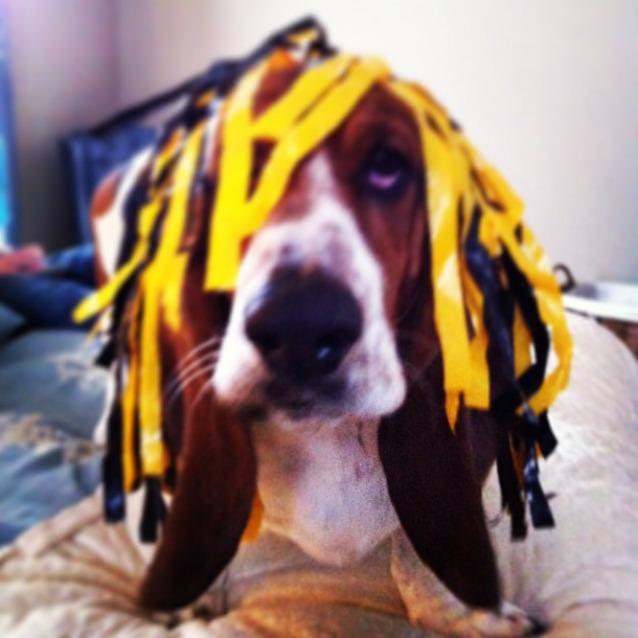 Buddy the Cheer Dog