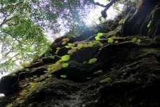 Lindas folhas que revestem a rocha