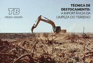 Técnica de destocamento: a importância da limpeza do terreno