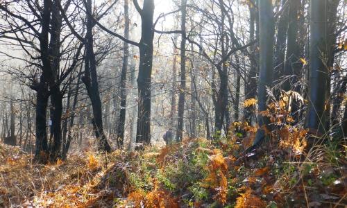 nel bosco a novembre