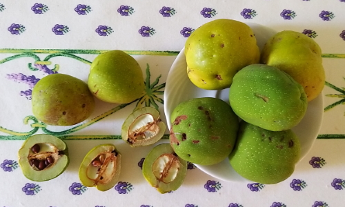 frutti di chaenomeles