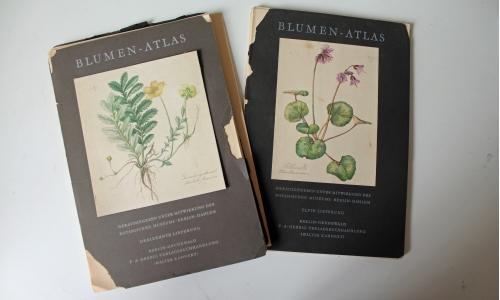 blumen - atlas