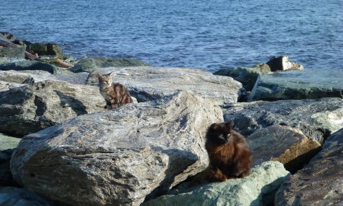 gatti di mare