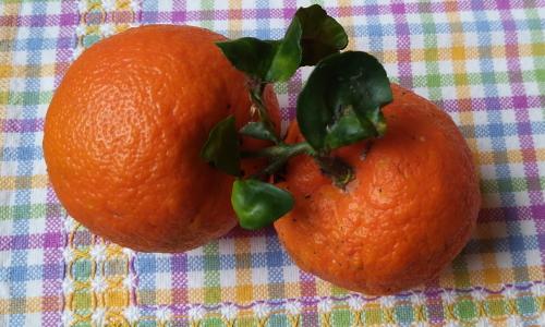 frutti di melangolo
