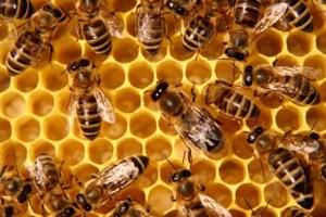 apicoltura miele luna di miele