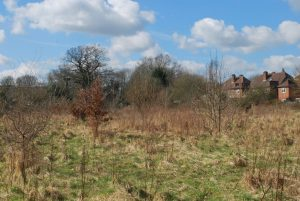 An unmanaged site is more valuable for wildlife