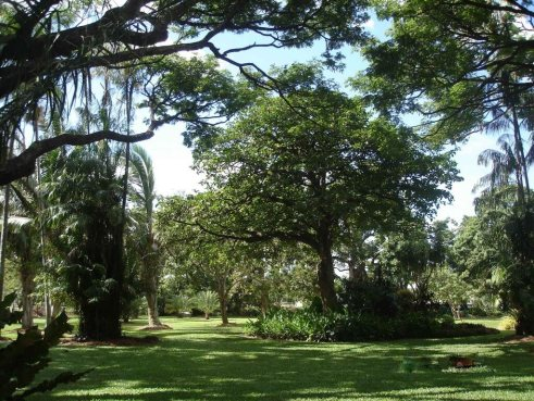 Queens-Gardens lush green lawns palms and shady trees tropical Townsville