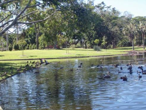 Anderson Park Tropical Townsville Native ducks