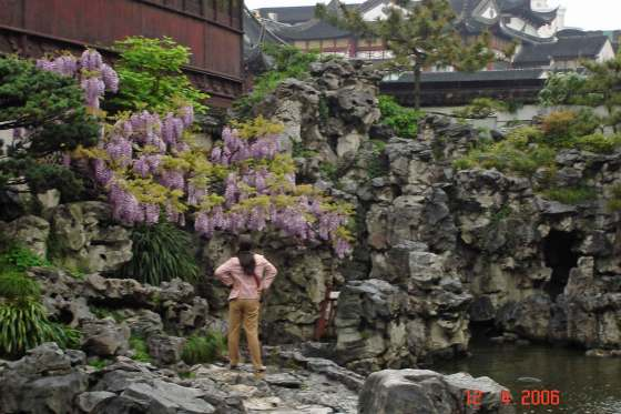 Yu-Garden---huge-Rockery-with wisteria