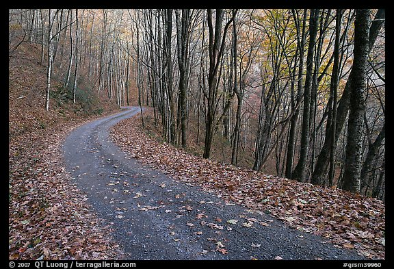 PicturePhoto Balsam Mountain Road In Autumn Forest