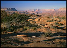 Rock slabs on  Esplanade, early morning. Grand Canyon National Park ( color)