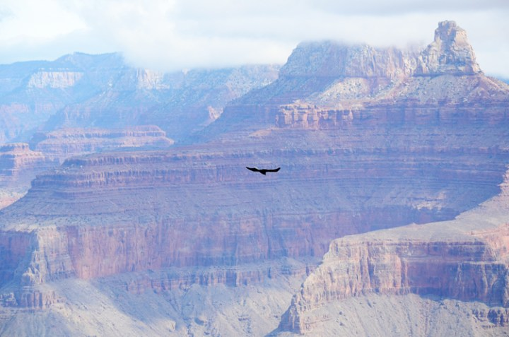 The South Kaibab Trail @ Grand Canyon National Park    terragoes.com