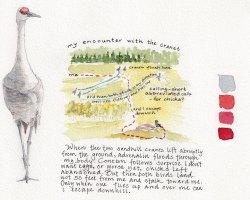 07. Encountering Sandhill Cranes