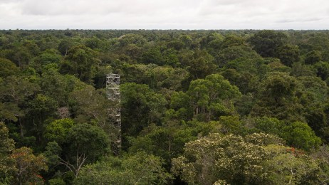Walk-Up Tower among Canopy