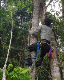Collecting Branch Samples