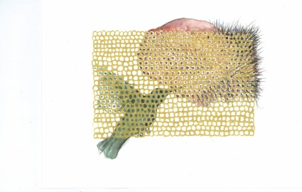 Vulcan's Net (Hummingbird)
