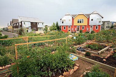 Holiday Neighborhood community garden