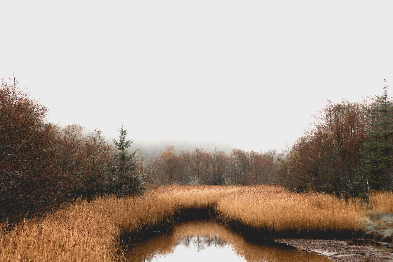 A foggy marsh