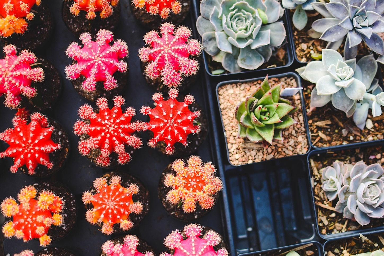 Colorful cactus garden