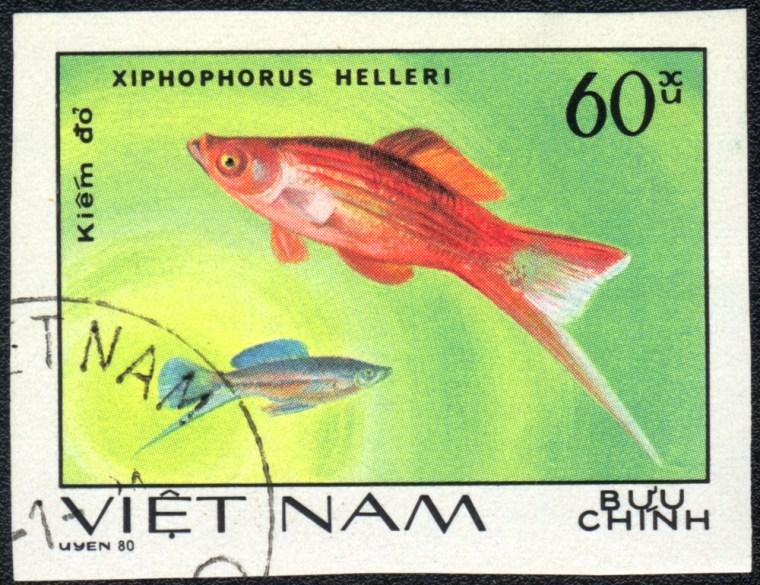 Swordtail platyfish stamp