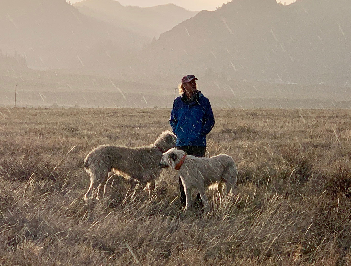 Mike with dogs in Colorado high country in the rain
