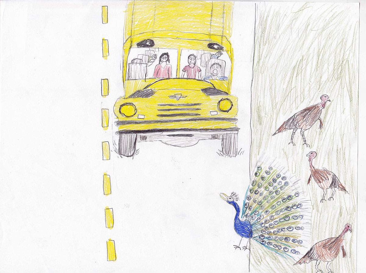 Drawing of peackock, turkeys, and bus.