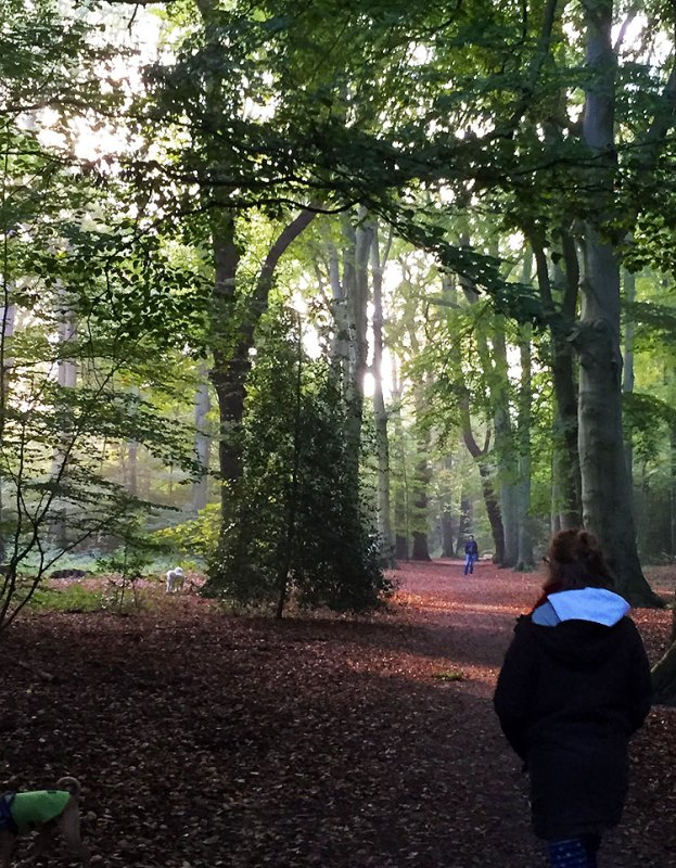 Walking among the trees of a Haarlem park
